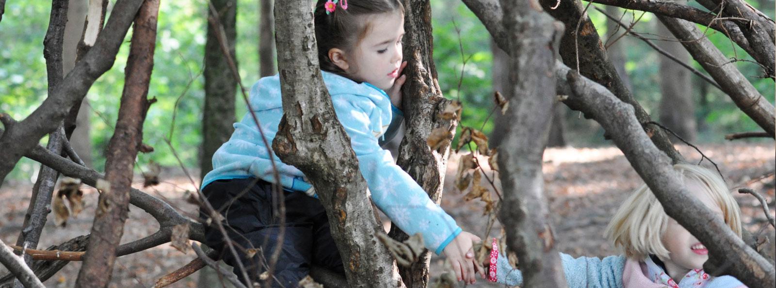 https://www.four-forestschool.ch/uploads/images/headerimage/sitemap.jpg